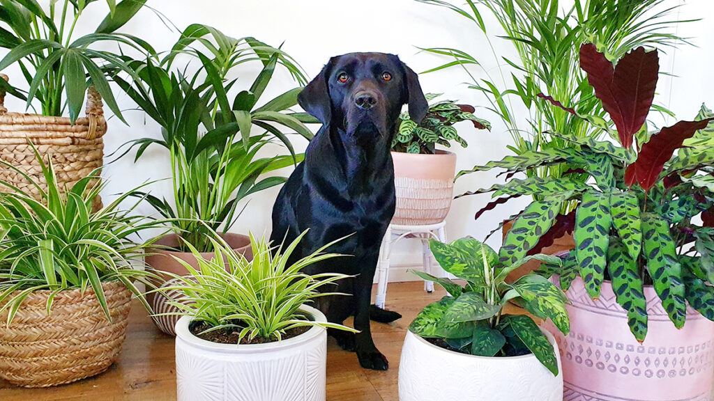 Dog surrounded by pot plants