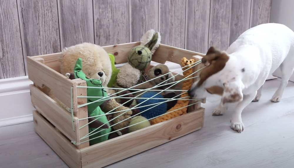 Dog toy box DIY projects for dogs