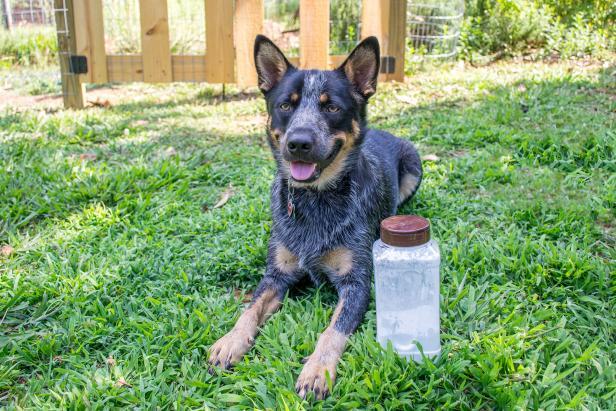 Dog with dry shampoo