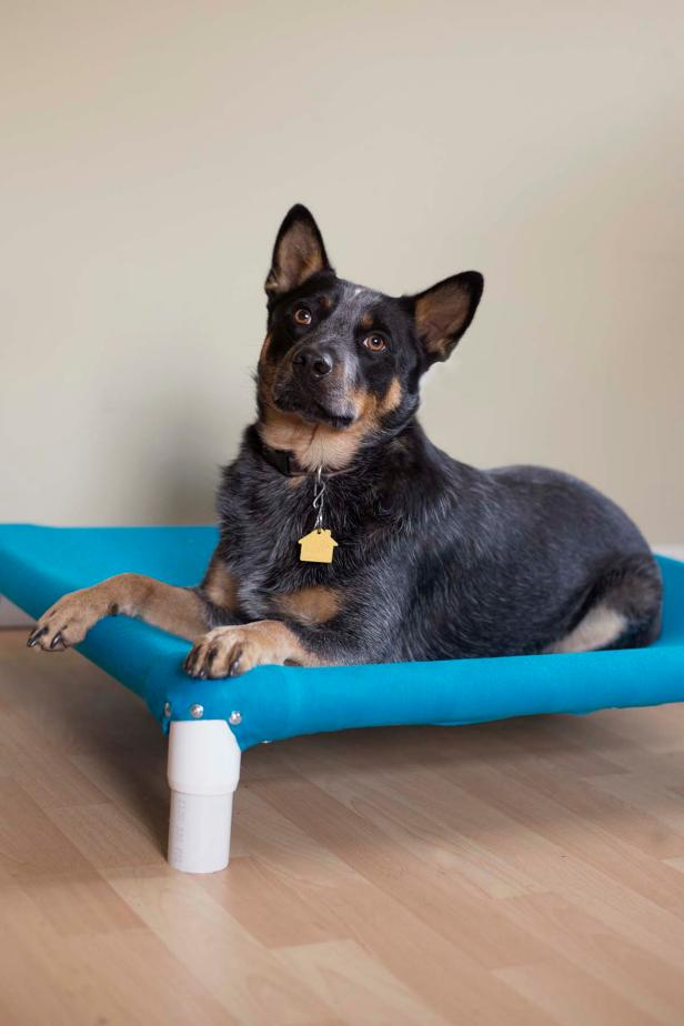 PVC pipe dog bed DIY projects for dogs