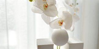 Beautiful-sculptural-vase feature image
