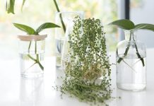 Plants you can grow in water feature